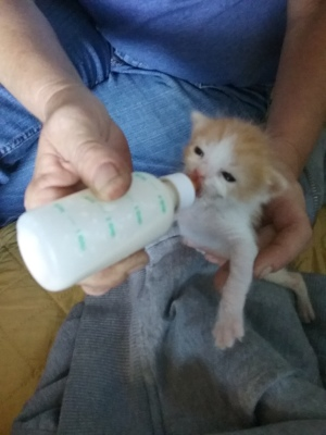 other rescued animals kitten bottle feeding